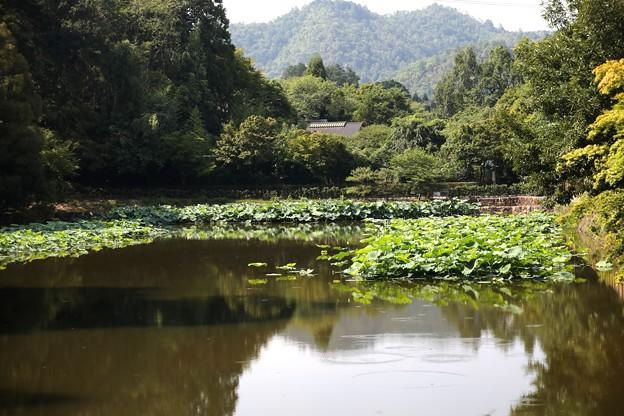 小倉池風景