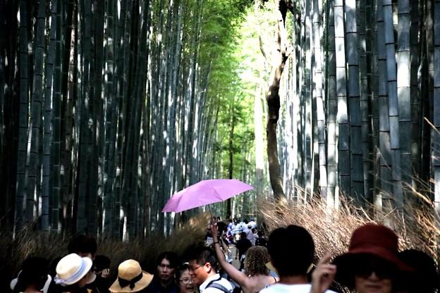 嵯峨野 竹林の道1