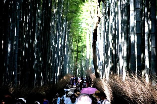 嵯峨野 竹林の道2