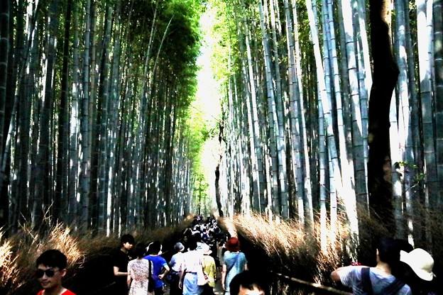 嵯峨野 竹林の道5