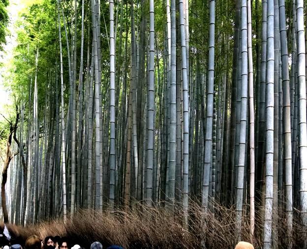 嵯峨野 竹林の道6
