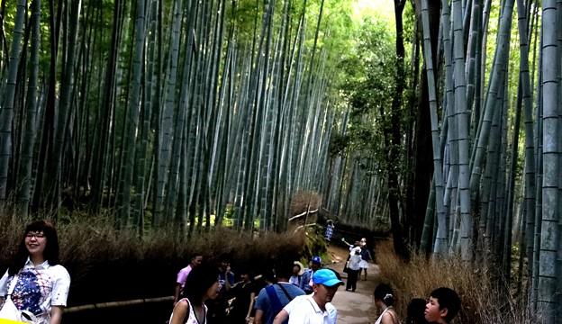 嵯峨野 竹林の道7