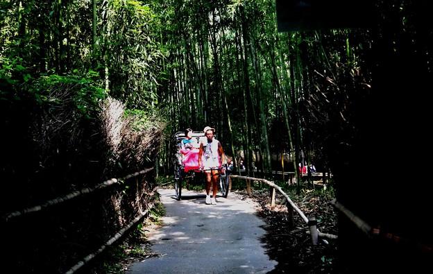 嵯峨野 竹林の道の人力車