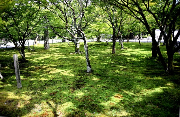 南禅寺の庭園6
