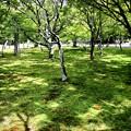 Photos: 南禅寺の庭園6