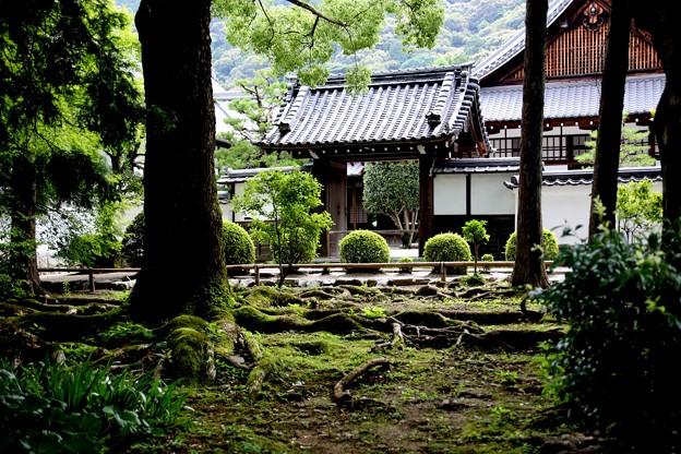 南禅寺 苔庭園風景