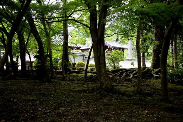 南禅寺の庭園7