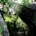 Photos: 哲学の道の風景3