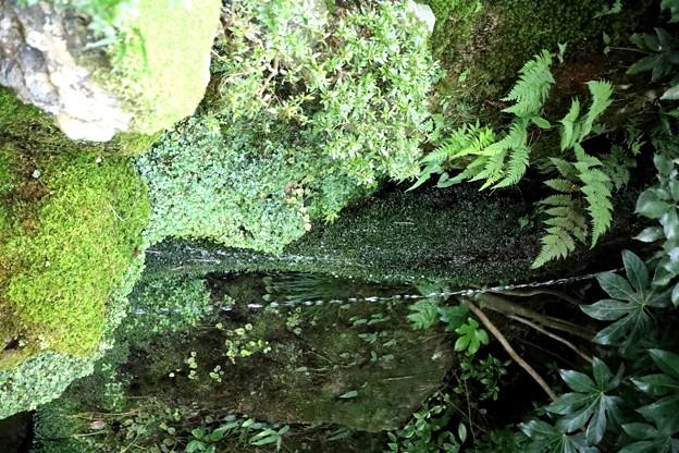 洗月泉の細い滝
