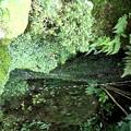 Photos: 洗月泉の細い滝