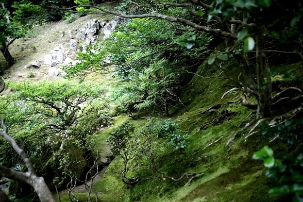 405銀閣寺苔の庭園3