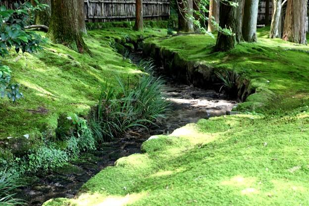 銀閣寺苔の庭園4