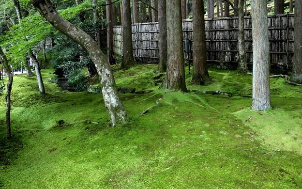 銀閣寺苔の庭園5