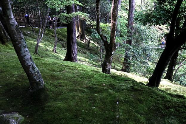 銀閣寺苔の庭園6
