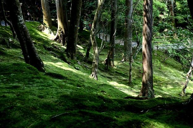 銀閣寺苔の庭園7