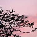 写真: 鵜鷺