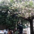 写真: 春には花を夏には木蔭を