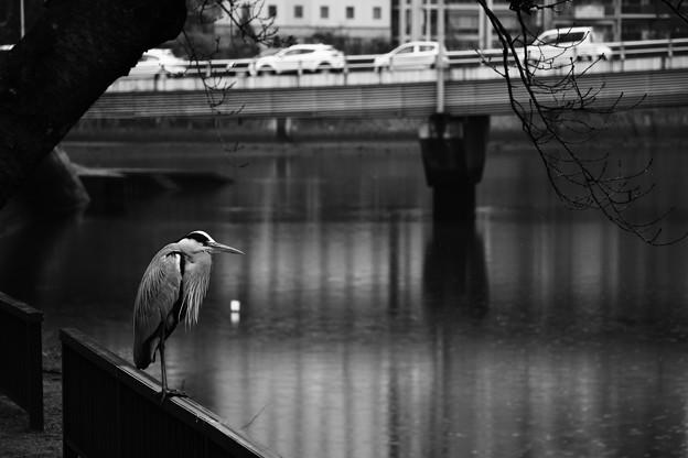 写真: 静