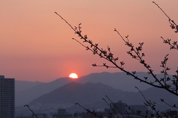 明日は咲くかな