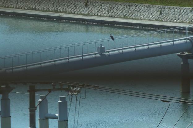 写真: 水道橋