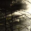 写真: 棘と葉