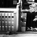 Photos: 入谷?