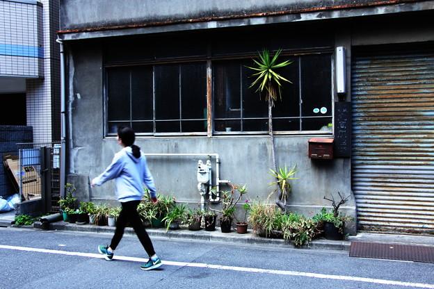 Photos: 鉢植え