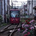 写真: 薔薇の駅