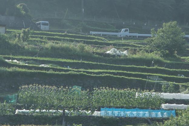 Photos: 畑