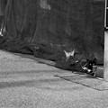 Photos: 監視
