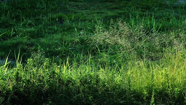 雑草のごとく