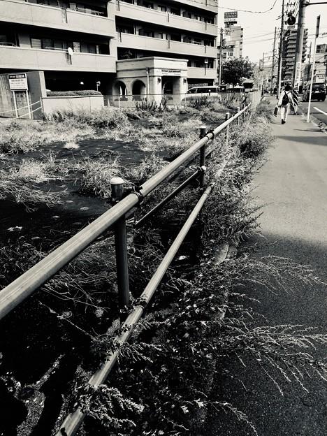 写真: ヨモギ