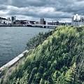 写真: 護岸の植生