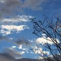 写真: 木枯らし