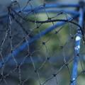 Photos: 第138回モノコン 「真珠養殖の網」だと思うw
