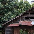 写真: 宇和島4-枇杷の家