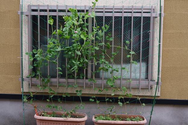 武蔵小山 春の窓