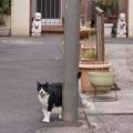 Photos: 武蔵小山 シーサーと