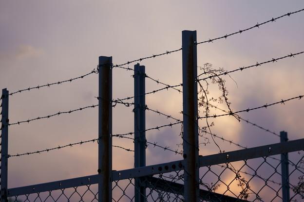 Photos: FREEDOM