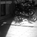 Photos: 点字ブロック