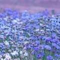 Photos: Blue
