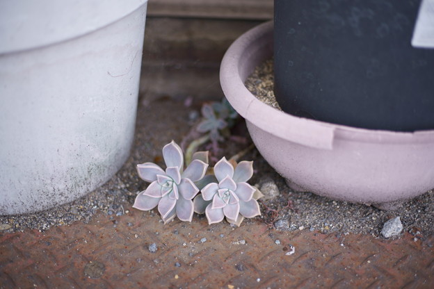 都会という砂漠に咲く花は