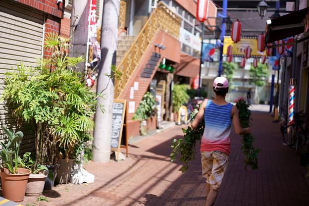 Photos: 青赤