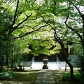 Photos: 大正寺