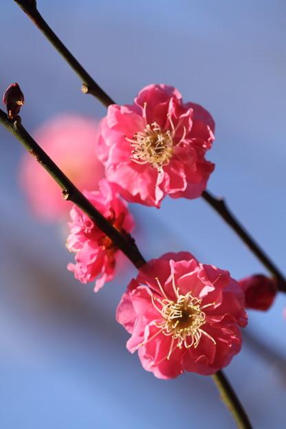 Photos: 春が来て 君はきれいになった
