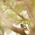 タイガース的鳥撮りかな
