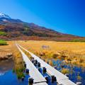写真: 竜ヶ原湿原の秋