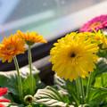 花咲くSA その2