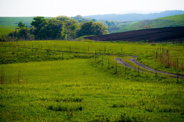 写真: 草原の道