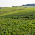 写真: 夕暮れの草原2